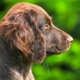 dog-992431_1280