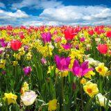 spring-awakening-1197602_1280