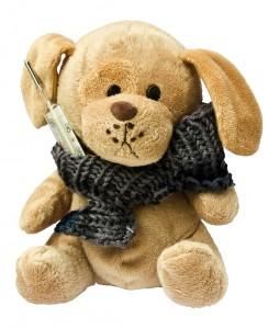 teddy-242878_1280